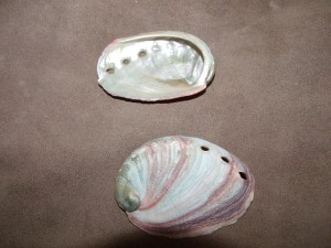 Small Abalone Shells $3.00 each